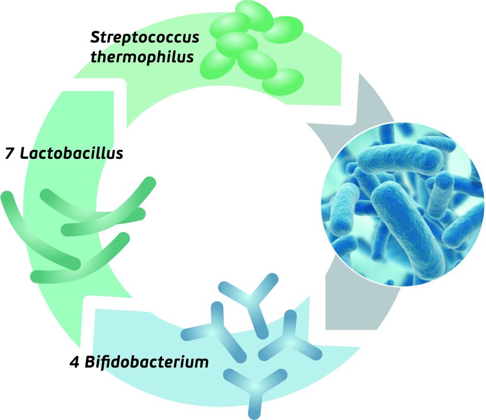 Dr.OHHIRA-gerosios bakterijos