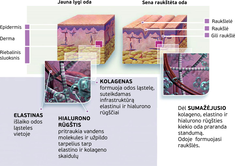 Dr.OHHIRA-kolageno, elastino ir hialurono ryšys