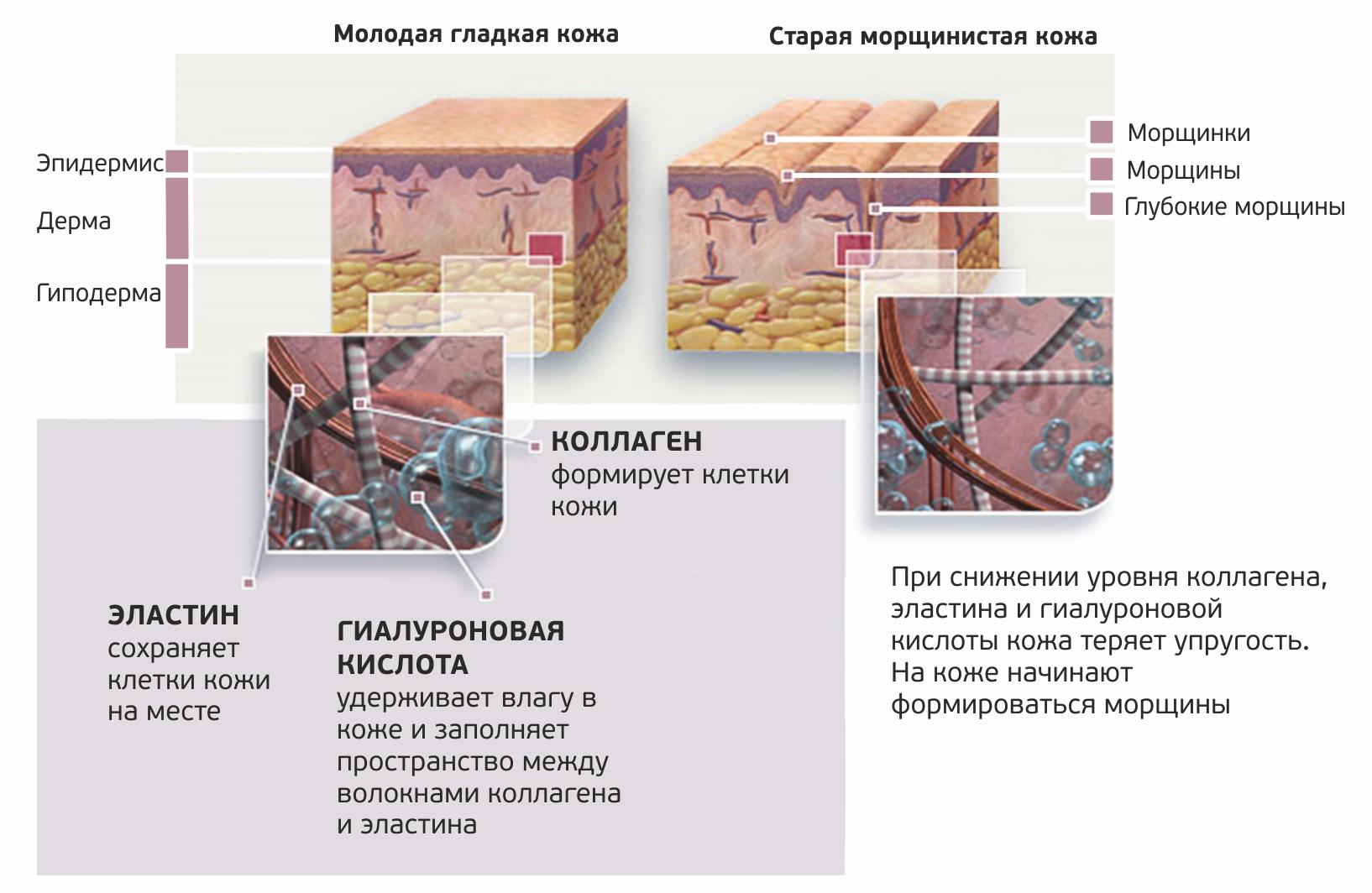 Skin structure_RU.jpg