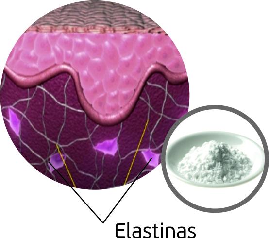 Dr.OHHIRA elastinas